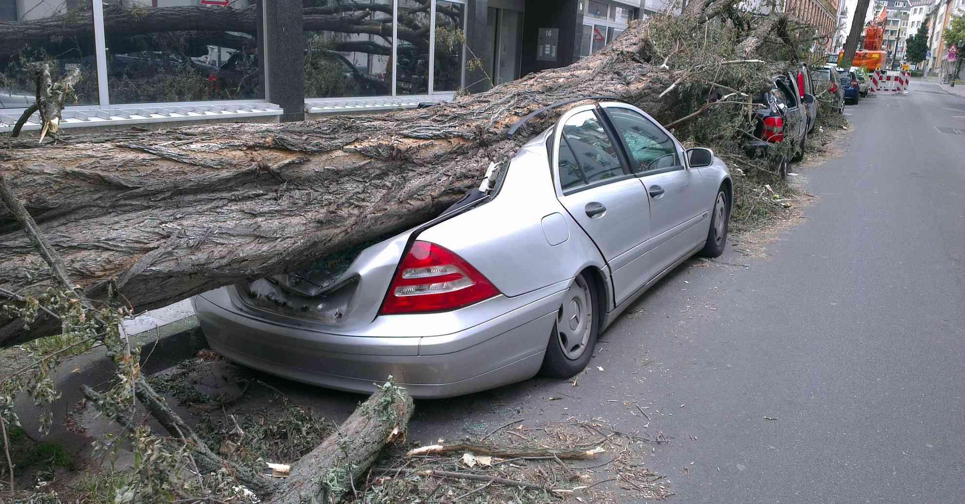 Падение дерева на ТС